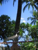 Hawai2007_226