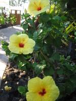 Hawai2007_248