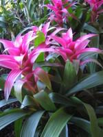 Hawai2007_281